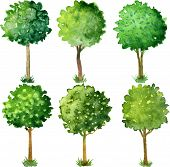 picture of tree leaves  - Six flowering trees trimmed in the shape of a ball - JPG