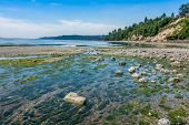 image of tide  - A wide freshwater stream flows into the Puget Sound at Saltwater State Park in Washington State. The tide is low and a serene mood is set by calm waters. ** Note: Visible grain at 100%, best at smaller sizes - JPG