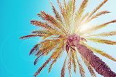 stock photo of sun flare  - Tropical palm tree with sun flares - JPG