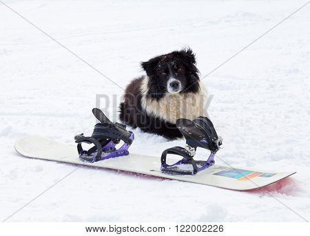Photo of a dog sitting behind a snowboard