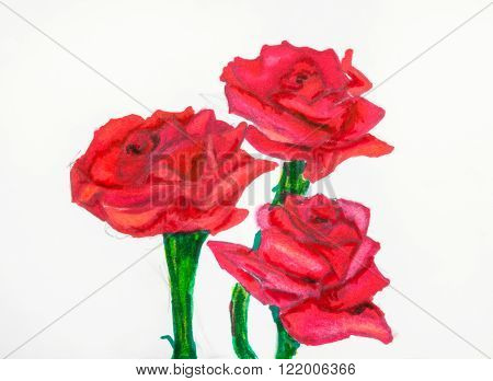 hand drawing - three red rose flowers on green stems painted by felt pen on white paper