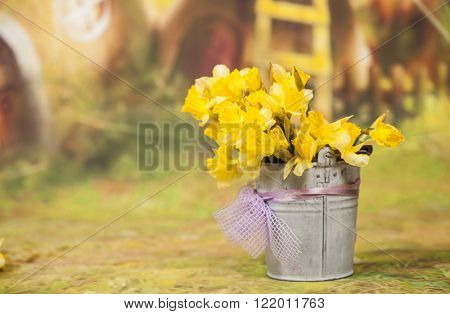 Yellow daffodil flowers in bucket