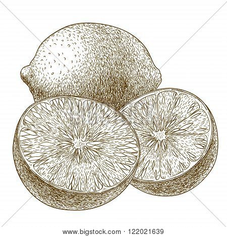 Vector engraving drawing antique illustration of lime isolated on white background
