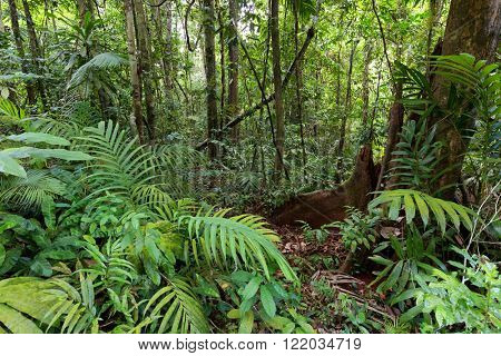 Deep wet jungle in Ko Kood island, Thailand