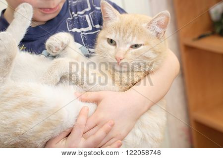 Lazy cat in the arms of child