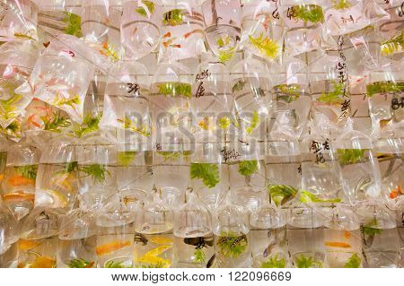 Small aquarium fishes inside the set of plastic bags on famous zoo market Golden Fish Hong Kong