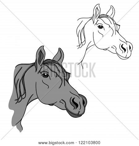 The circuit in the form of a horse's head. Grey Arabian horse on white background. Vector illustration kids sketch