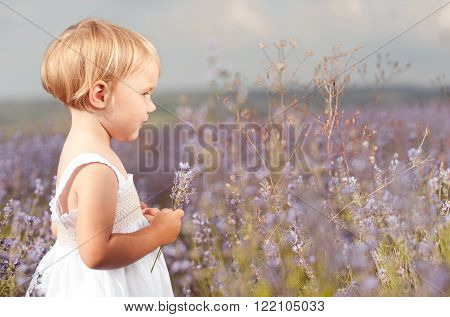 Little kid girl 2-3 year old holding lavender flowers in meadow. Looking away. Childhood