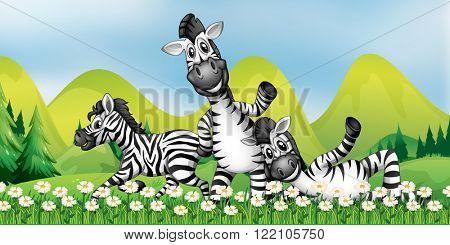 Three zebras in the flower field illustration