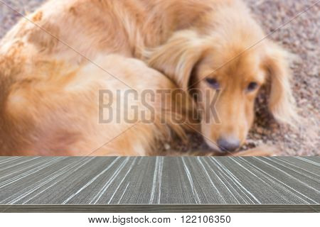 mongrel brown dog laying on the ground (blur background and wooden table for displaying your product)