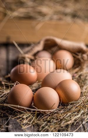 Eggs lying near the hay nest, studio shot