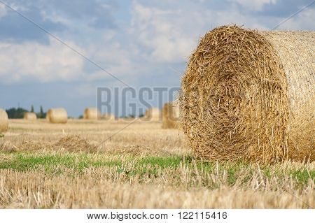 Staw bales on fields at harvesting time