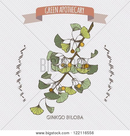 Ginkgo biloba color sketch. Green apothecary series. Great for traditional medicine, gardening or cooking design.