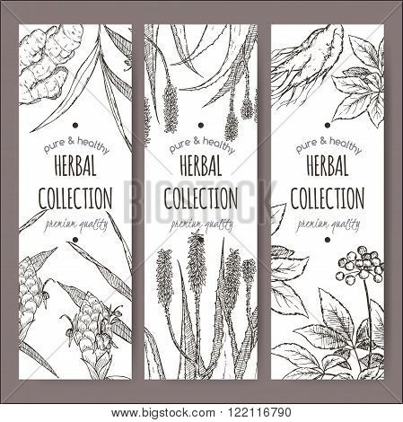 Set of three vector herbal tea labels with ginger, aloe and ginseng hand drawn sketch. Placed on white background.