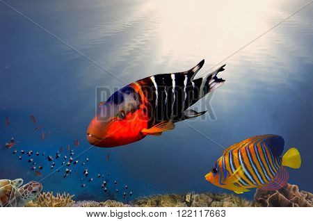 Underwater coral reef background. Red Sea, Egypt