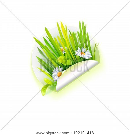 Spring grass and daisy flowers on white sticker, season vector illustration. Summer floral bouquet with herbs. Eco friendly technology, natural farm product or park and rest logo. Nature flora banner. Spring grass and green plants bouquet