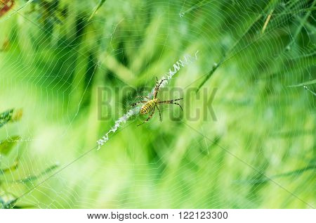 Spider sitting on a cobweb in summer grass
