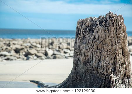 A driftwood tree trunk is seen along the beach shoreline.