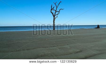 A long driftwood tree on a sunny day in South Carolina.