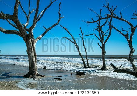 Many driftwood trees on the shore of South Carolina during high tide.