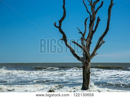 A dead driftwood tree during high tide on the beach in South Carolina.