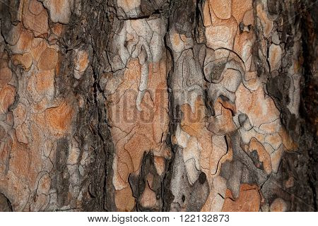 Dark fir bark texture. Fir bark background. Fir bark texture. Tree bark background. Bark background. Bark texture. Tree bark texture
