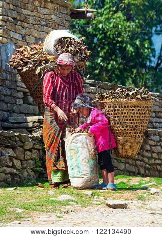 ANNAPURNA AREA, NEPAL - MARCH 26: Nepalese woman carrying heavy load on the road on March 26, 2014 in Annapurna District, Nepal.