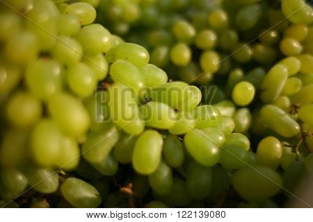 stock of fresh raw lot of  green grapes.