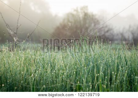 Morning dew on fresh spring grass on the meadow, natural background