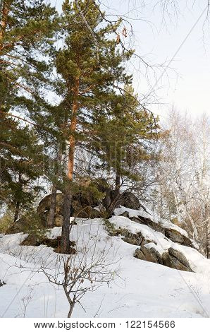 Winter forest with large boulders on the top of Mount Tserkovka in the vicinity of the resort Belokurikha Altay Russia.