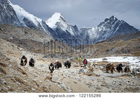 SAGARMATHA NATIONAL PARK NEPAL - CIRCA MARCH 2014: Himalayan Herdsman and Yak on the trail near Everest Base Camp in Nepal circa March 2014.