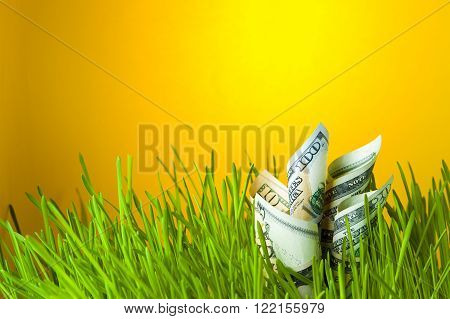 Dollars in green grass. Currency growth. Financial concept.
