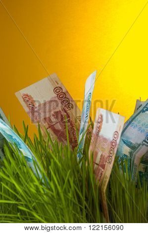 Ruble bills growing in green grass. Investment growth. Financial concept.