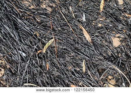 Black and burned grass after a land clearing.
