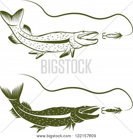 Set Of Pike And Lure Vector Design Template