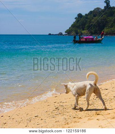 Salty Sea Dog  Cute Pet
