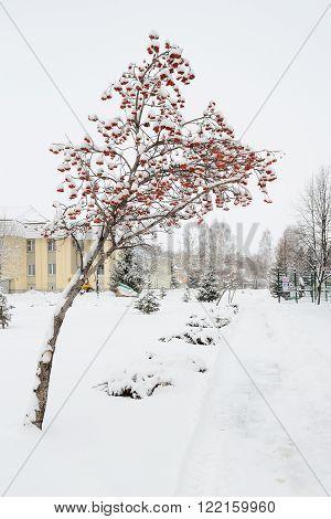 Territory of Belokurikha sanatorium is located at Belokurikha resort Altay Russia.