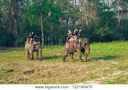 Elephant Safari In Chitwan , Nepal