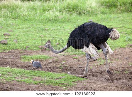 ostrich emu under a drizzle in a sunny day