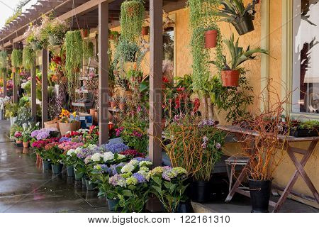 A lovely outdoor flower market in Long Beach, California.