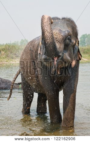 Elephant Swimming