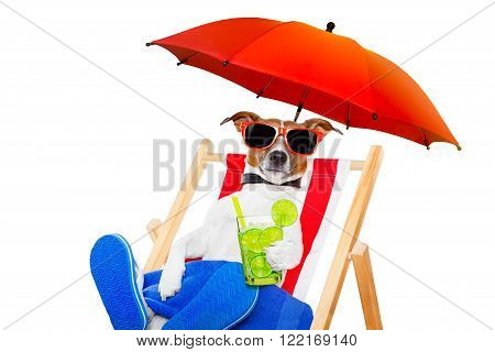 jack russell dog with caipirinha cocktail  on a beach chair with sunglasses under umbrella , on summer vacation holidays isolated on white background