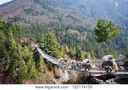 Yak On The Bridge   In Nepal