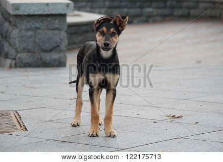 Lonely homeless puppy looking with hope. Animals