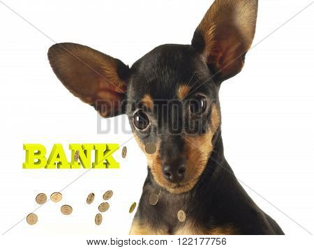 BANK Bright word Long Dog with long face and ears on white background