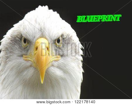 BLUEPRINT bright green volume letter animall white eagle on black background