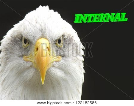 INTERNAL bright green volume letter animall white eagle on black background