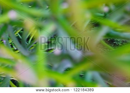 Defocussed foliage abstract nature background in green.