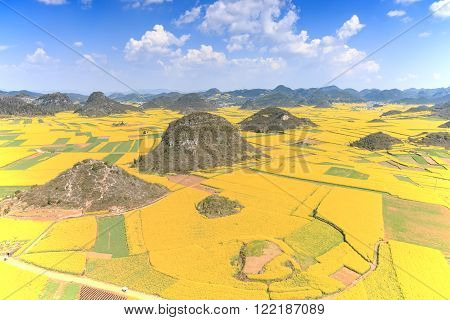 Rapeseed flowers of Luoping in Yunnan China ** Note: Soft Focus at 100%, best at smaller sizes
