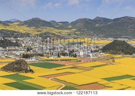 Rapeseed Flowers Of Luoping In Yunnan China